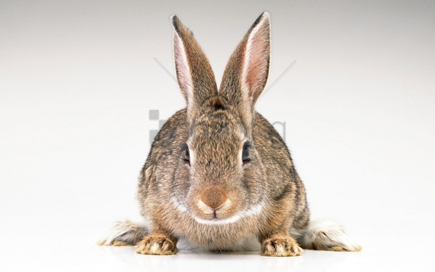 free PNG ears, hare, rabbit wallpaper background best stock photos PNG images transparent