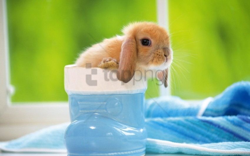 free PNG ears, muzzle, rabbit wallpaper background best stock photos PNG images transparent