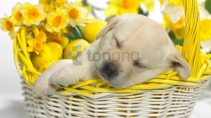 free PNG easter, eggs, flowers, labrador, puppy, shopping, sleeping wallpaper background best stock photos PNG images transparent