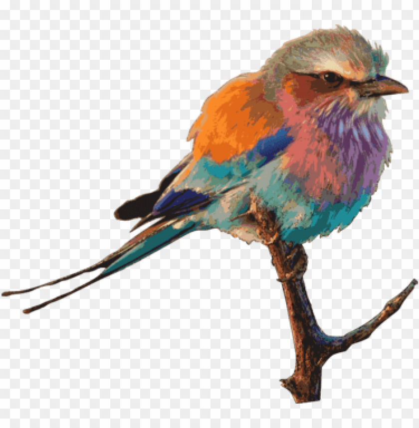 free PNG eastern bluebird birds & birding drawing birdwatching - roller bird PNG image with transparent background PNG images transparent