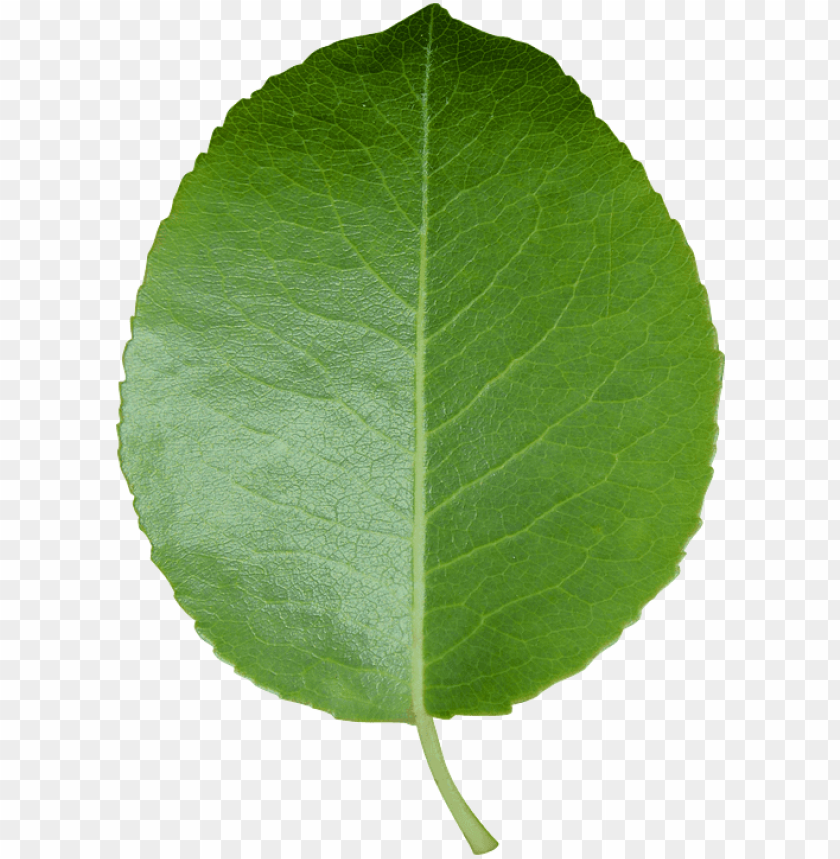 free PNG eel n stick poster of leaf green leaf transparent - leaf transparent background PNG image with transparent background PNG images transparent