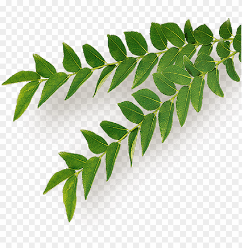 free PNG eem - organic PNG image with transparent background PNG images transparent