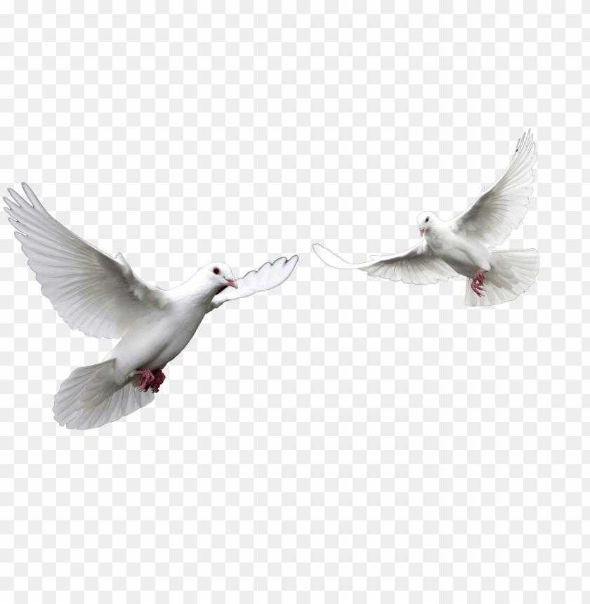 free PNG el espiritu santo paloma related keywords el espiritu - doves PNG image with transparent background PNG images transparent