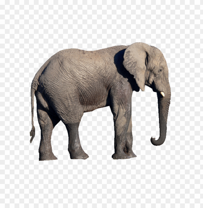 free PNG Download elephant png images background PNG images transparent
