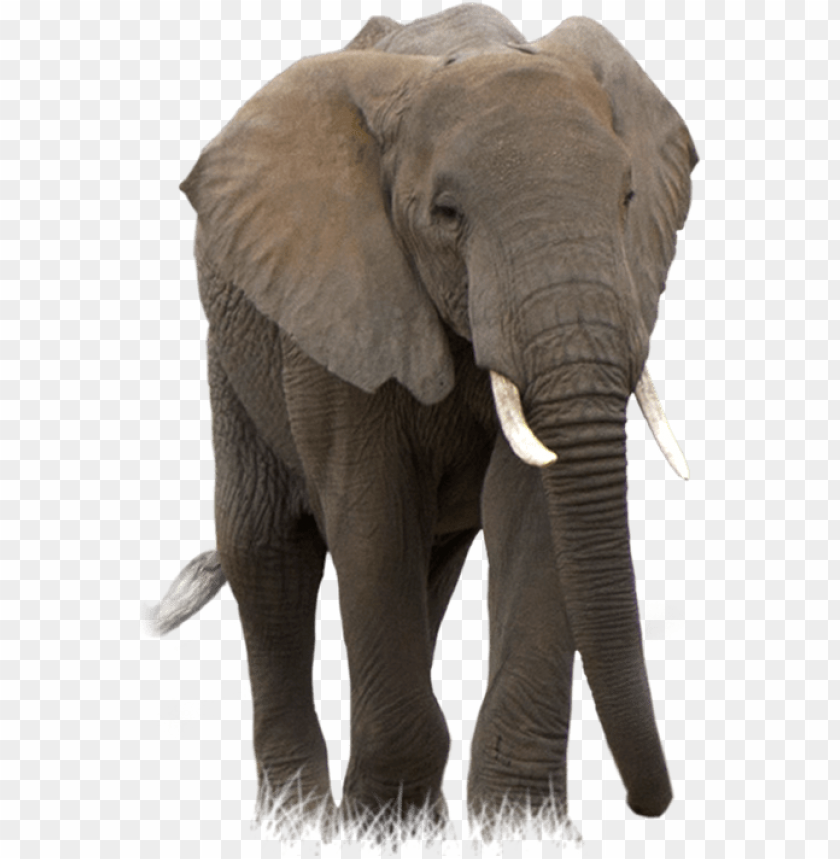 Download Elephant Png Images Background Toppng Elephant prissy the elephant matriarch mrs. download elephant png images background