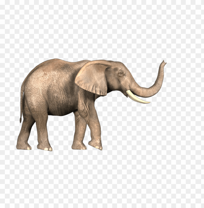 Download Elephant Png Images Background Toppng Pin the clipart you like. toppng