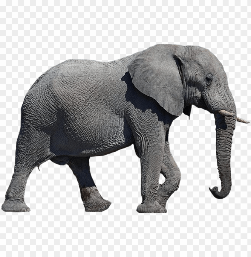 Download Elephant Png Images Background Toppng Discover 1582 free elephant png images with transparent backgrounds. download elephant png images background