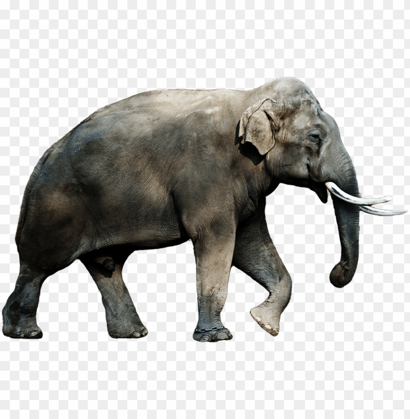 Download Elephant Png Images Background Toppng The elephant jungle animal series features a. toppng