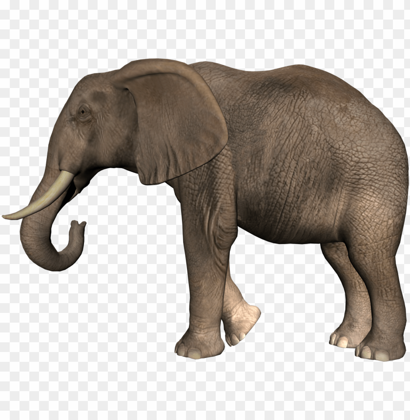 Elephant Png Download : Elephants png images free download, elephant.