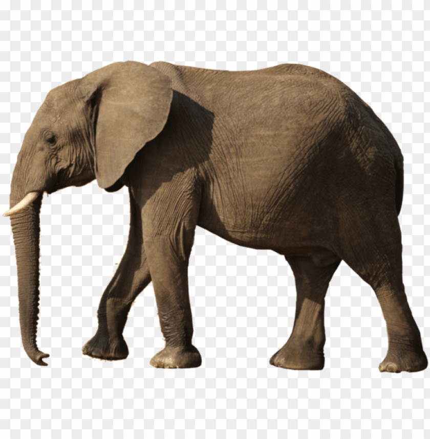 Elephant Png Image With Transparent Background Toppng African bush elephant indian elephant african forest elephant, elephant png. elephant png image with transparent