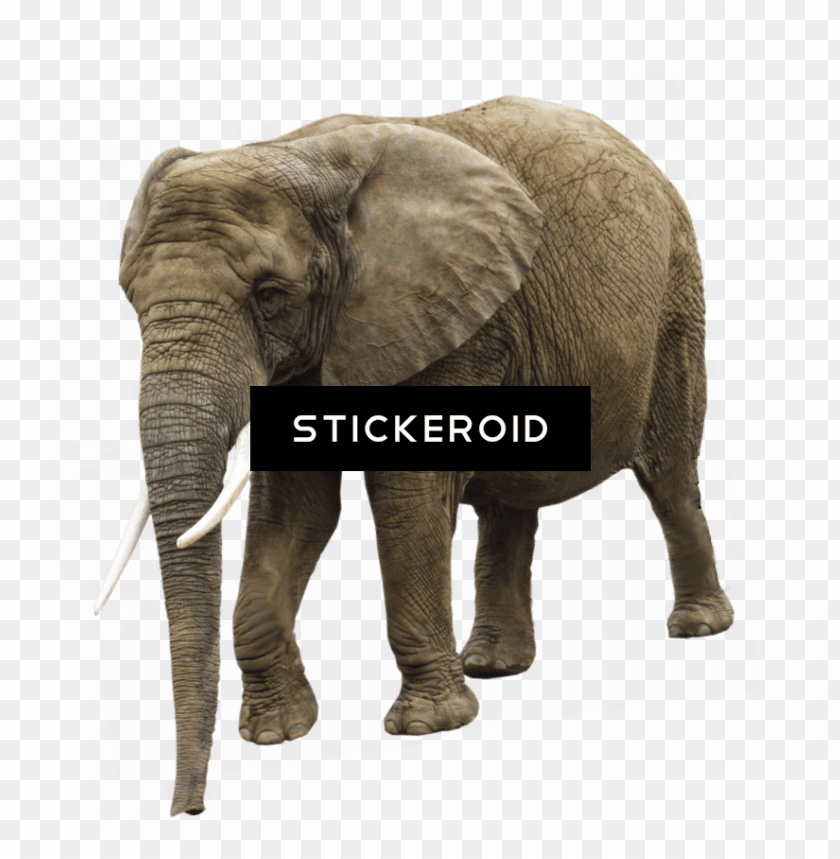 free PNG elephant PNG image with transparent background PNG images transparent