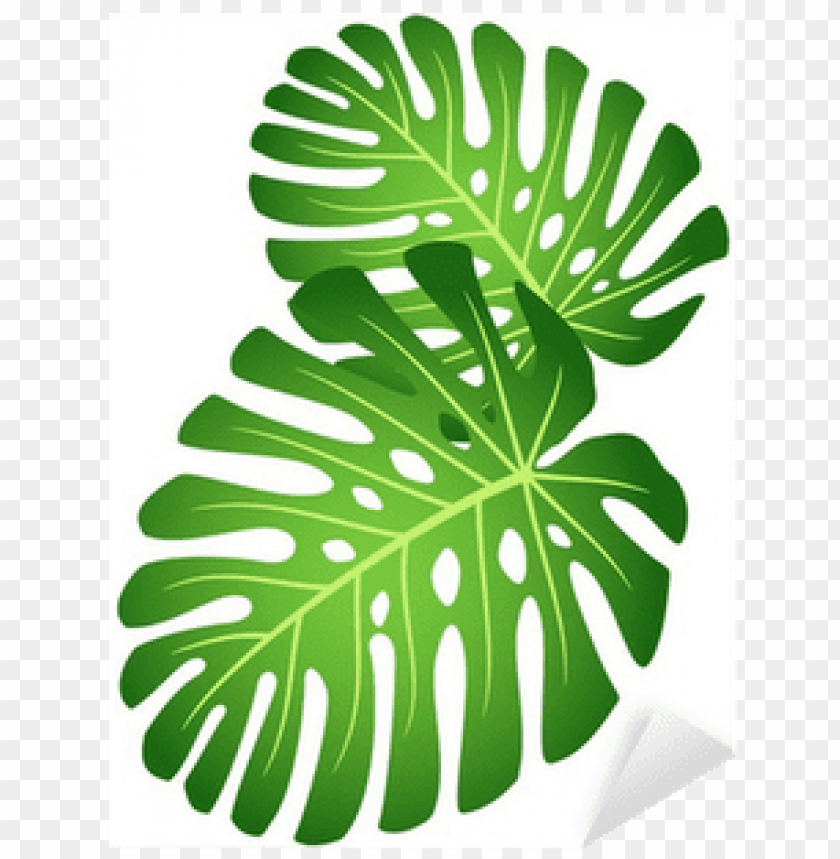 free PNG elephant ear plant PNG image with transparent background PNG images transparent