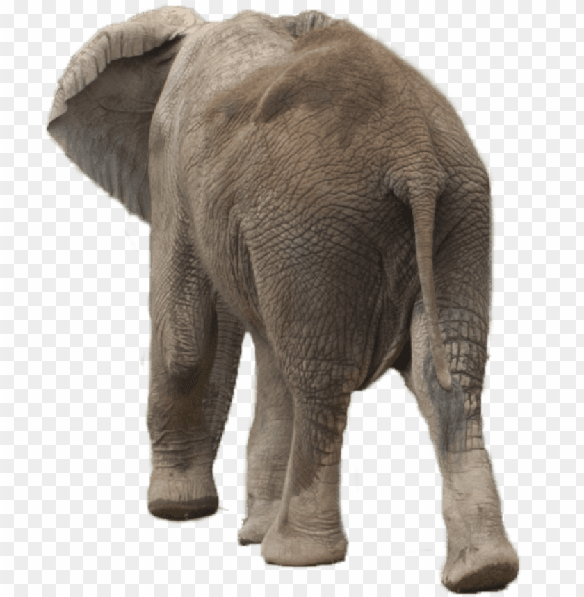 Elephant Png Elephant Png Image With Transparent Background Toppng ✅free for personal use only ❌commercial usage: toppng