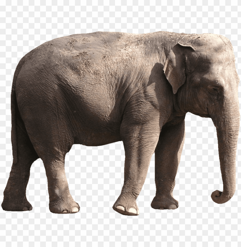 Elephant Png Images Elephant Images Png Image With Transparent Background Toppng Download icons in all formats or edit them for your designs. elephant png images elephant images