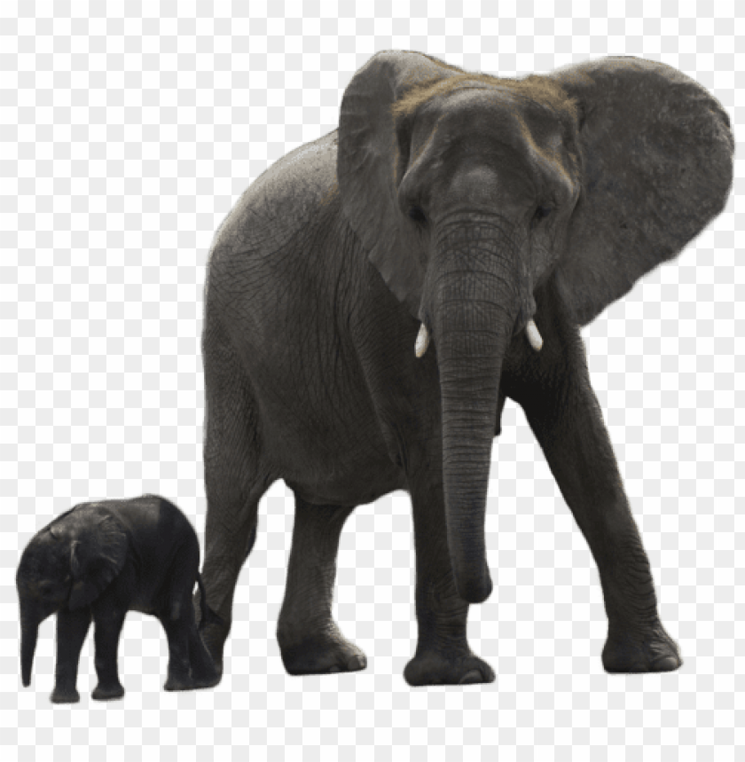 free PNG elephant transparent PNG image with transparent background PNG images transparent