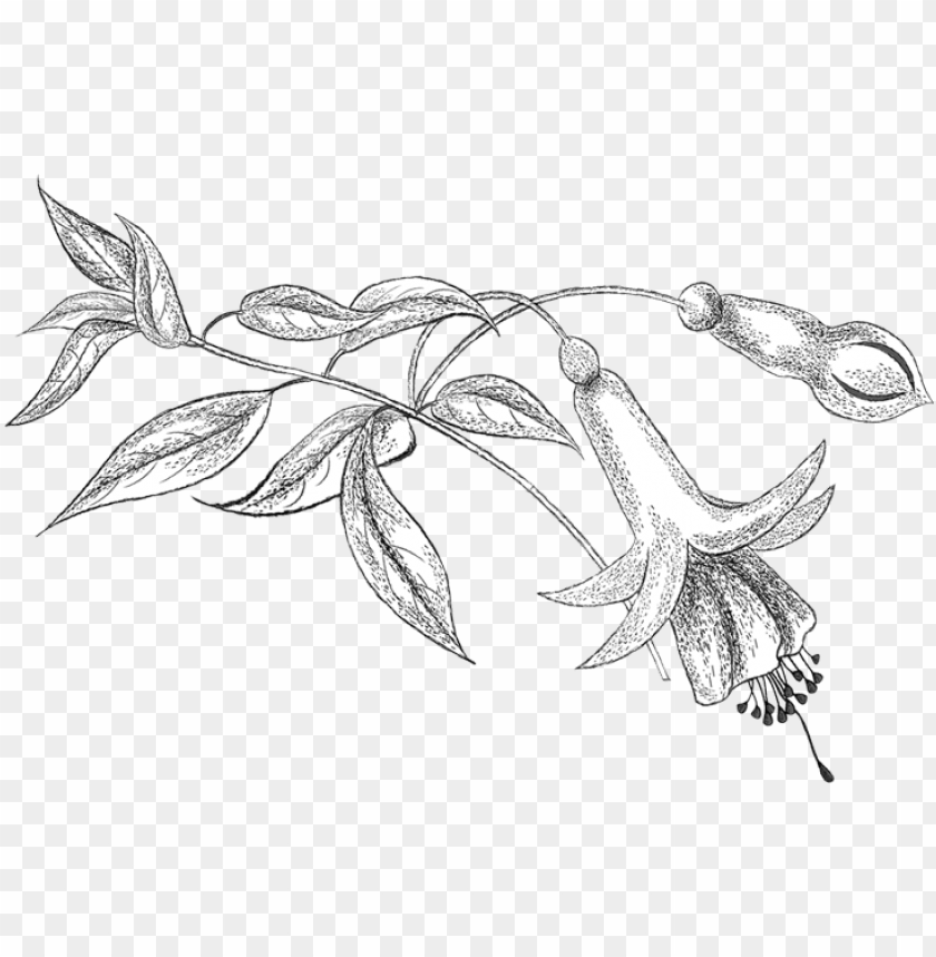 Encil Png Colouring Coloring Books Flower Patterns Line Art Png Image With Transparent Background Toppng