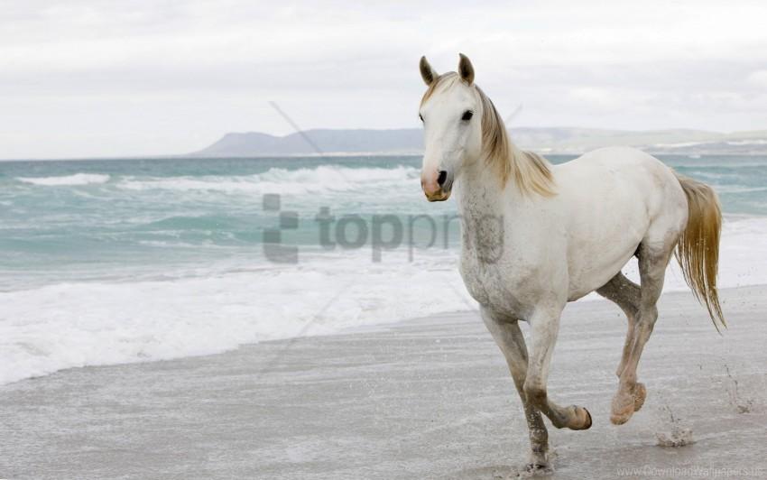 Escape Sand Sea White Horse Wallpaper Background Best Stock