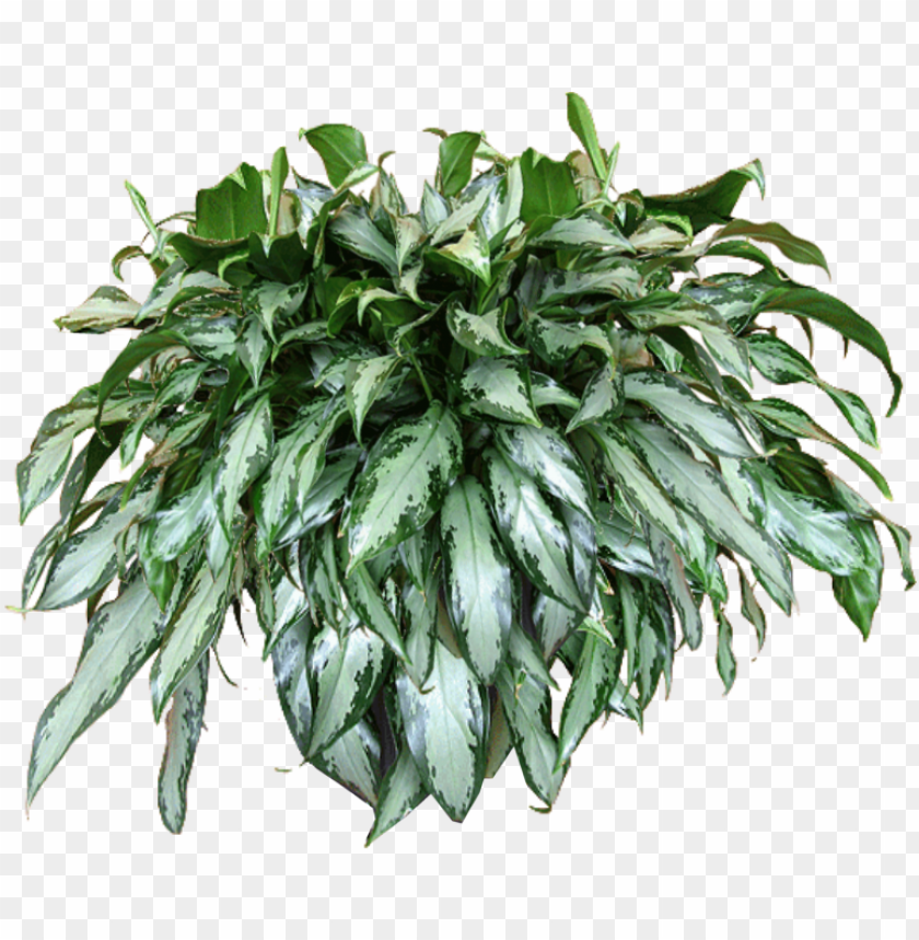 free PNG excellent jaceydecora hanging plant texturepng with - transparent hanging baskets PNG image with transparent background PNG images transparent