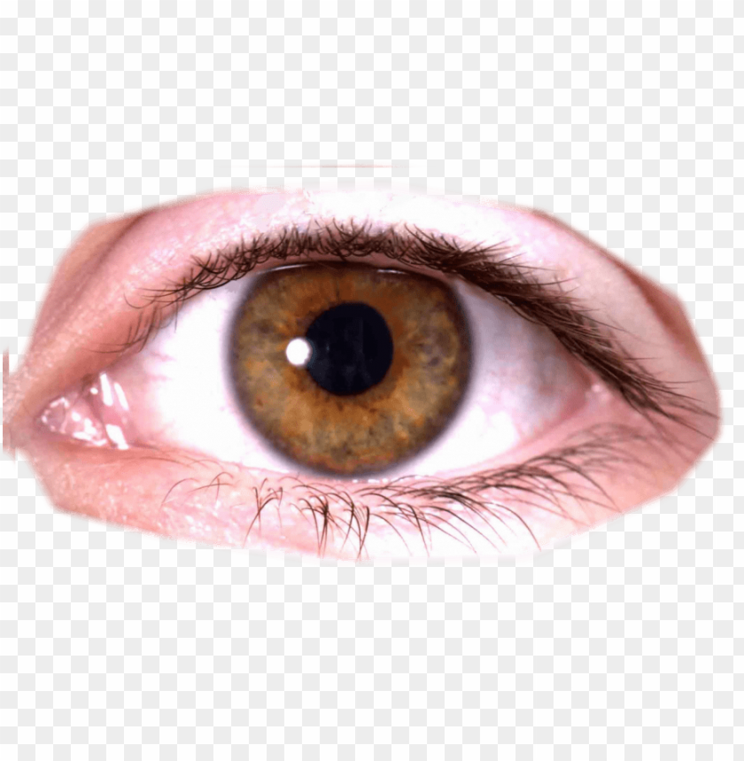 free PNG Download eye png images background PNG images transparent