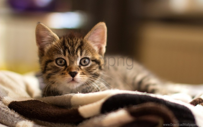free PNG eyes, face, fear, kitten wallpaper background best stock photos PNG images transparent