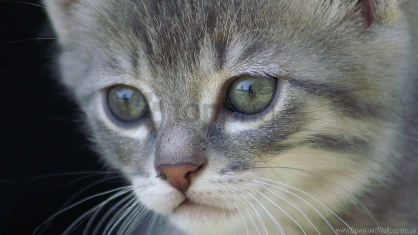 free PNG eyes, face, fluffy, kitten wallpaper background best stock photos PNG images transparent