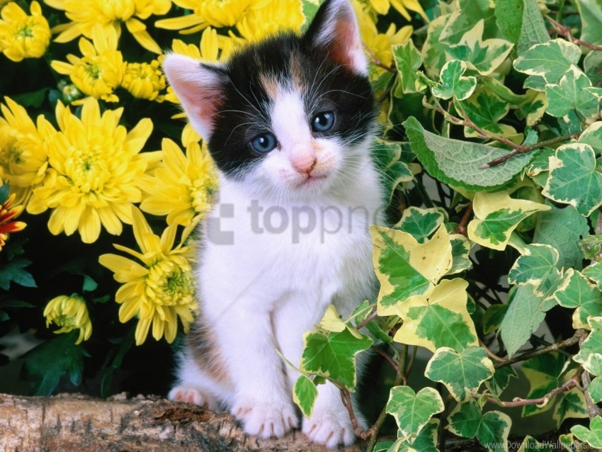 free PNG eyes, face, kitten, leaves, sad wallpaper background best stock photos PNG images transparent