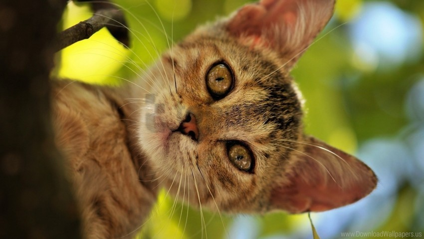 free PNG eyes, face, kitten, look out wallpaper background best stock photos PNG images transparent