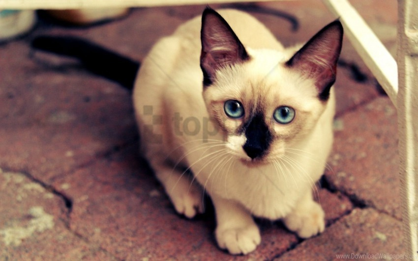 free PNG eyes, face, kitten, mottled wallpaper background best stock photos PNG images transparent