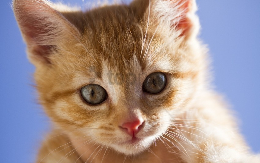 free PNG eyes, face, kitten, red, scared wallpaper background best stock photos PNG images transparent