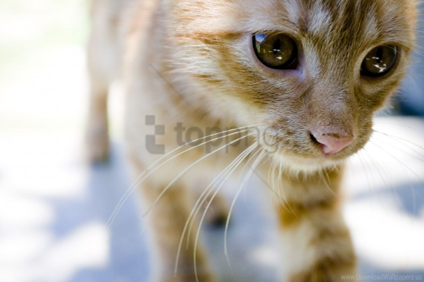 free PNG eyes, face, kitten wallpaper background best stock photos PNG images transparent