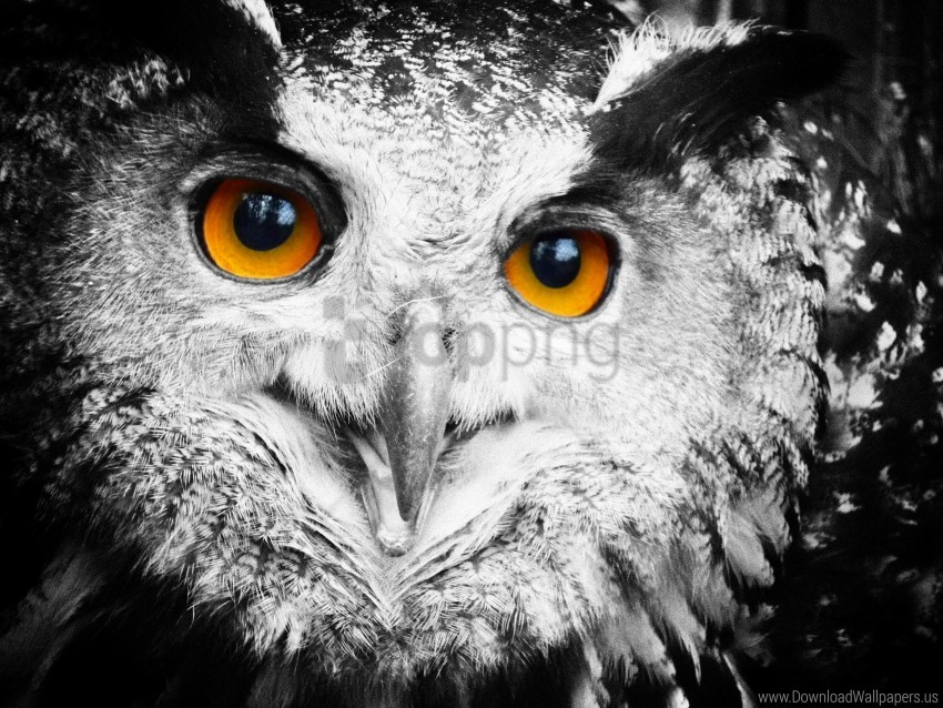 free PNG eyes, feathers, owl wallpaper background best stock photos PNG images transparent