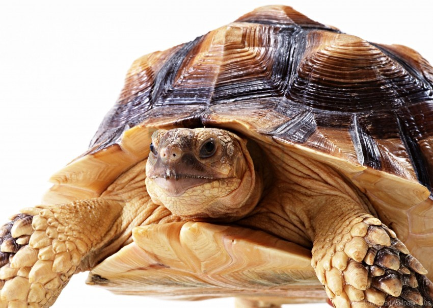 free PNG eyes, head, large turtle, shell wallpaper background best stock photos PNG images transparent