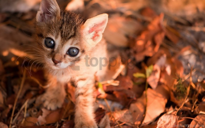 free PNG eyes, kitten, leaves, muzzle wallpaper background best stock photos PNG images transparent