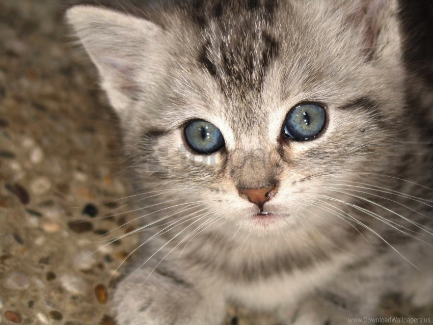 free PNG eyes, kitten, muzzle wallpaper background best stock photos PNG images transparent