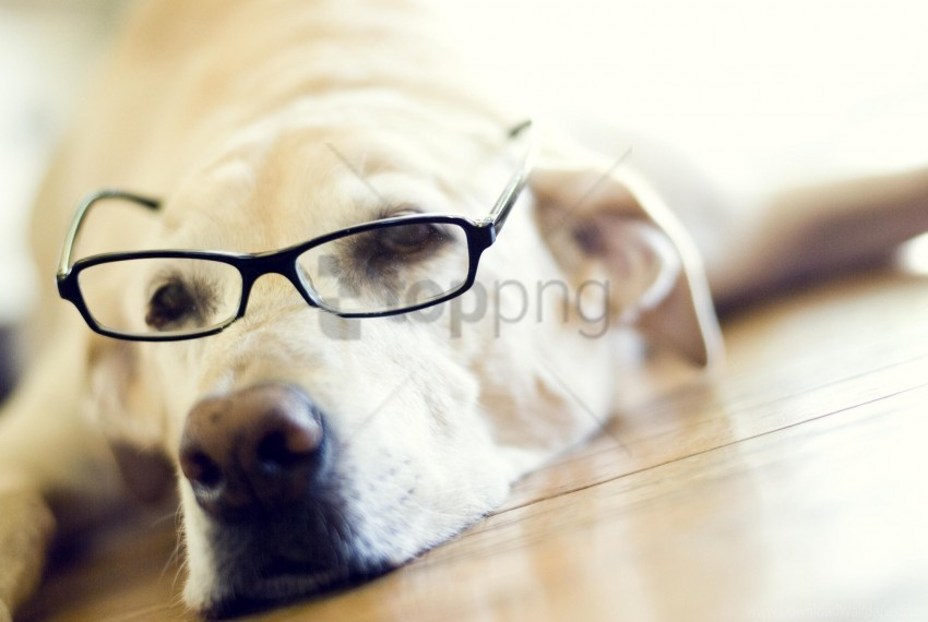free PNG face, goggles, labrador, retriever wallpaper background best stock photos PNG images transparent