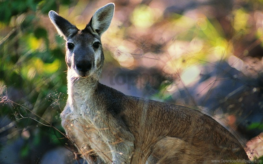 free PNG face, kangaroos, leaves wallpaper background best stock photos PNG images transparent
