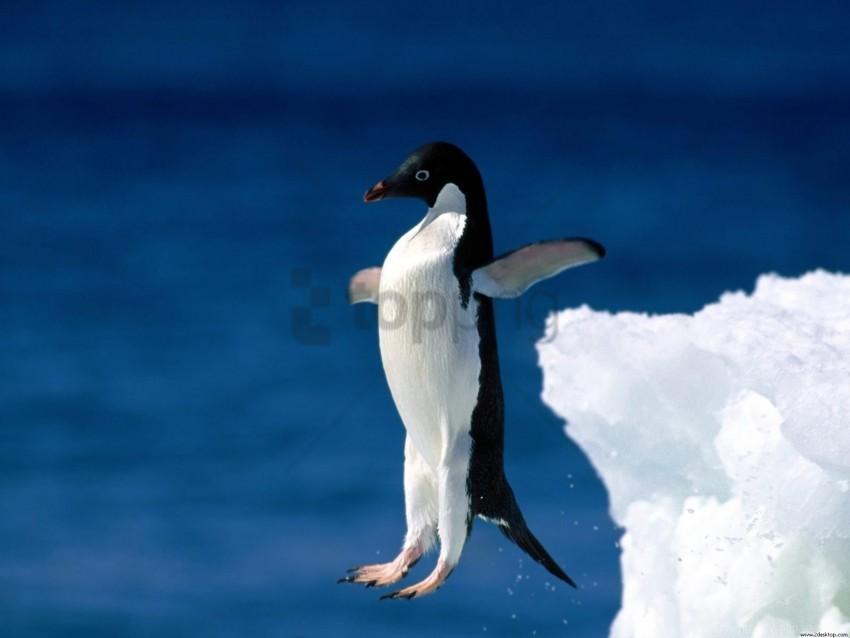 free PNG faith, leap, penguin wallpaper background best stock photos PNG images transparent