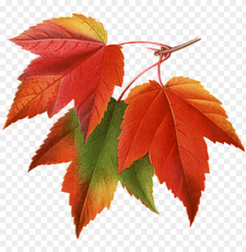 free PNG fall leaves - autumn leaves PNG image with transparent background PNG images transparent