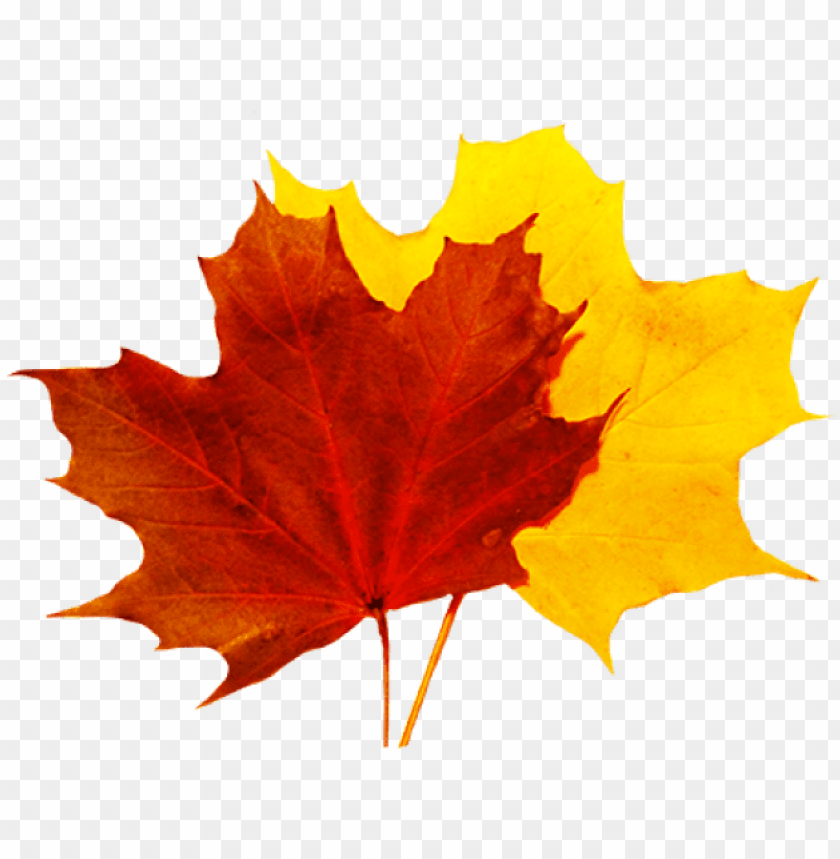 free PNG fall leaves clip art - fall leaves transparent PNG image with transparent background PNG images transparent