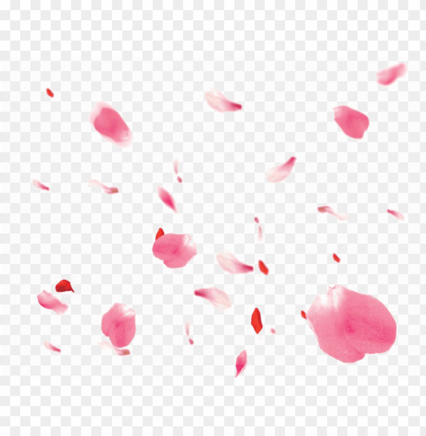falling petals png transparent image - portable network graphics PNG image with transparent background@toppng.com