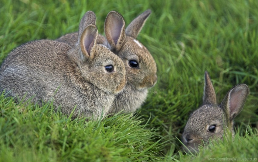 free PNG fear, grass, hide, masking, rabbits, sit, three wallpaper background best stock photos PNG images transparent