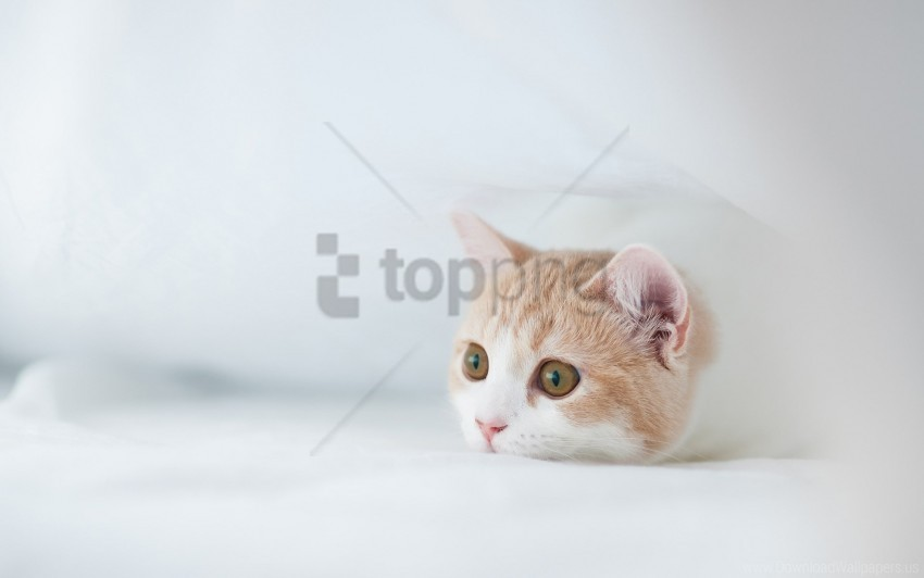 free PNG fear, hiding, hunting, kitten, muzzle wallpaper background best stock photos PNG images transparent