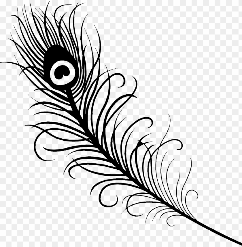 free PNG feather, ing, az - peacock feather vector black and white PNG image with transparent background PNG images transparent