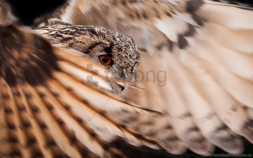 free PNG feathers, flap, owl, wings wallpaper background best stock photos PNG images transparent