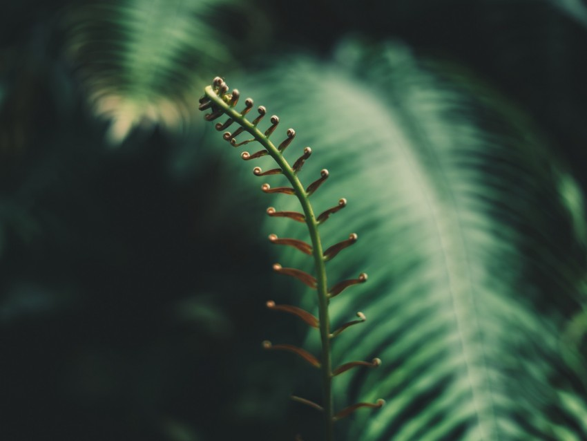 free PNG fern, branch, leaves, tropical, plant background PNG images transparent