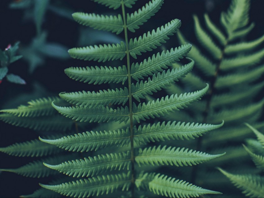 free PNG fern, leaf, carved, green, closeup, plant background PNG images transparent