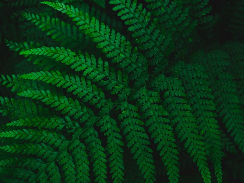 free PNG fern, leaves, carved, green, vegetation, leaf background PNG images transparent