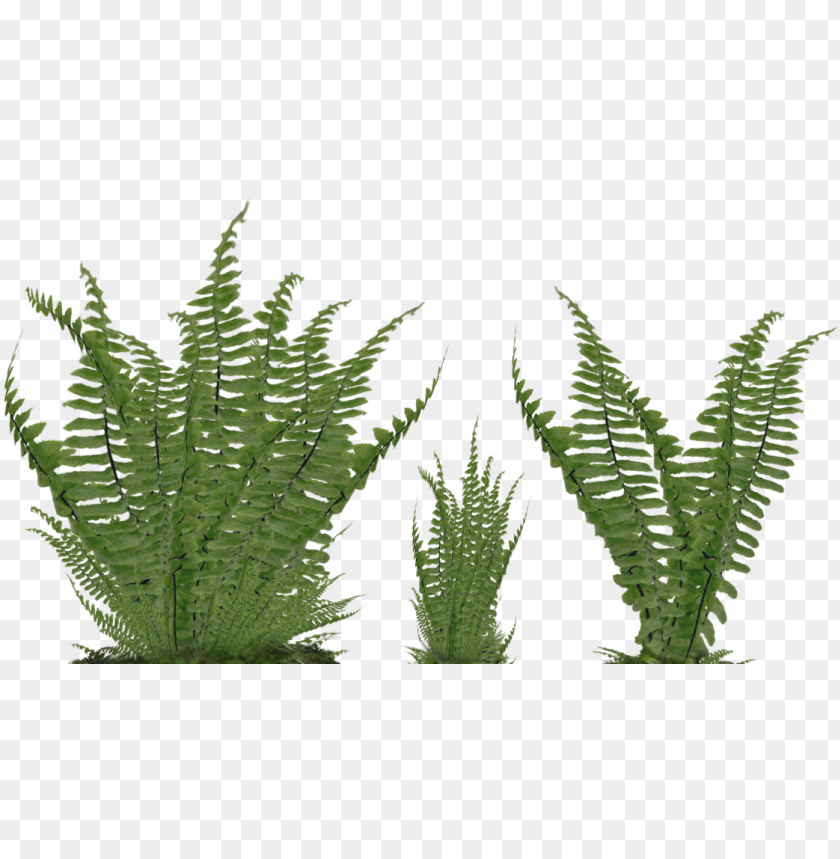free PNG fern png svg freeuse stock - ground plant PNG image with transparent background PNG images transparent