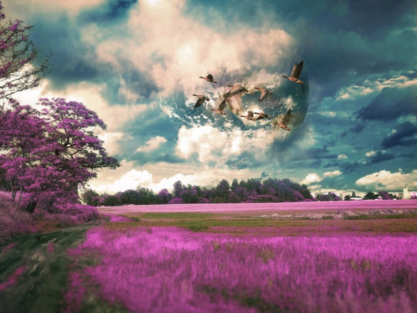 free PNG field, birds, photoshop, flight, sky, grass background PNG images transparent