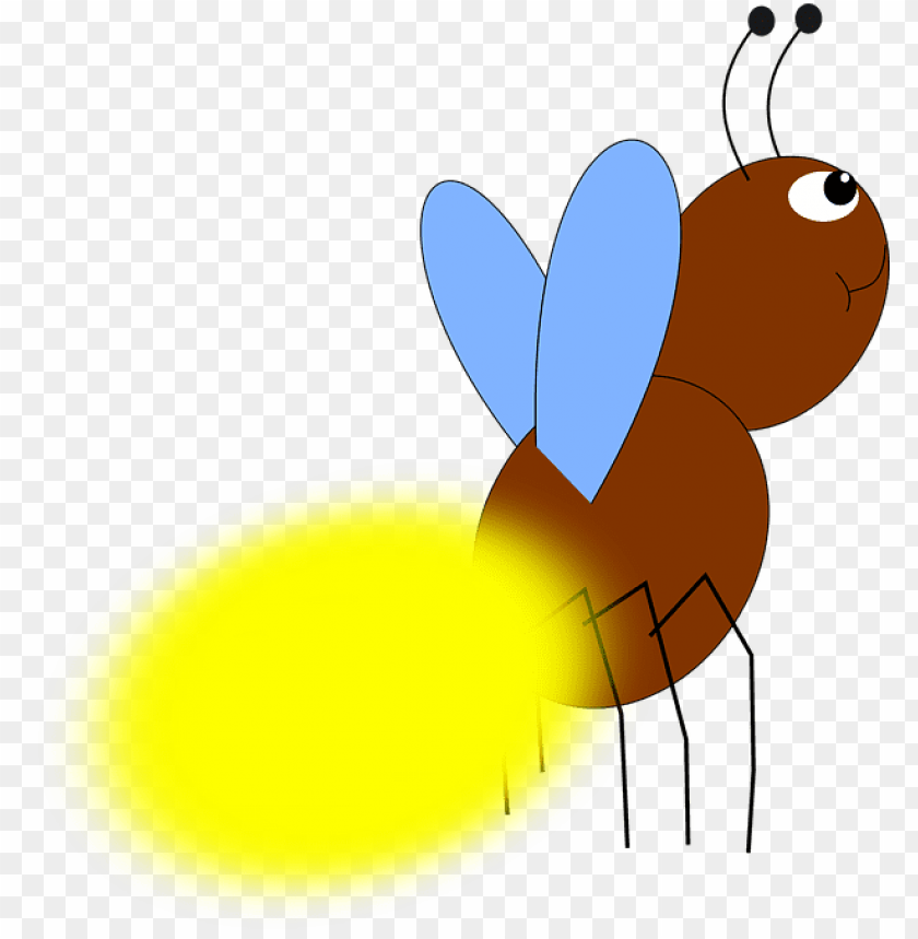 free PNG firefly PNG image with transparent background PNG images transparent